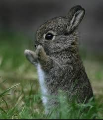 cute baby bunnies with floppy ears. Fine Cute On Cute Baby Bunnies With Floppy Ears S