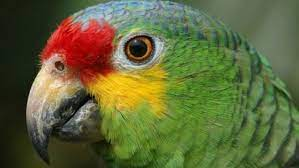 Tia-bird | Parrot training, Parrot, Funny birds