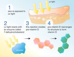 Vitamin D Uv Light Vitamin D3 Cholecalciferol Hopes Huntingtons Disease