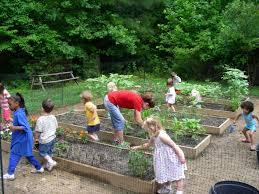 Kitchen Garden International Childrens Vegetable Gardens Introduction Natural Learning