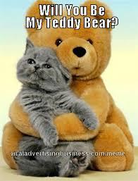 Cat Teddy Bear meme   Meme Magnet via Relatably.com
