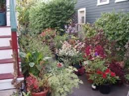 Small Picture Julia Houriet Custom Gardening Design Services Cambridge