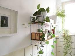 Bathroom living wall decorating ideas. Best Plants That Suit Your Bathroom Fresh Decor Ideas