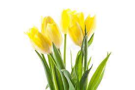 Znalezione obrazy dla zapytania kolory wiosny