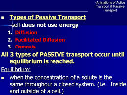 3 Types Of Passive Transport Chapter 7 3 Cell Boundaries Ppt Download