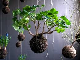 Decorating With Moss Balls Make moss balls to hang himself decoration with flowers and 8
