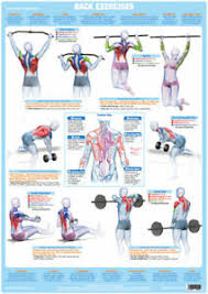 Weight Training Chart With Pictures Details About Back Muscles Weight Training And Body Building Poster Gym Exercise Chart