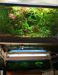 10 gallon planted aquarium lighting t2 light side top view