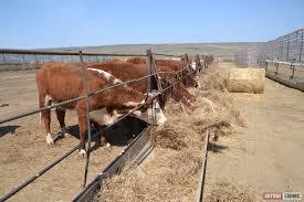Животноводство в приоритете Актобе Таймс Животноводство в приоритете