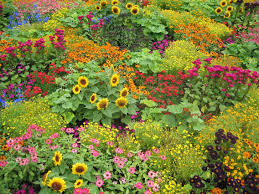 english garden flowers. Country Seeds Flowers English Garden Flower Wallpaper National Geographic - 2272x1704 E