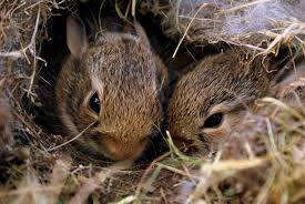 replacing their bedding reasonably frequently to be sure they re safe best rabbit bedding