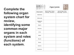 Body Systems Chart Organization And Regulation Of Body Systems Ppt Video