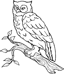 Small Picture Free Owl Coloring Pages olgusacom
