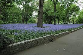 bluebell wood brooklyn botanic garden