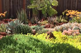 Small Picture Drought Tolerant Garden Design Arid Accents
