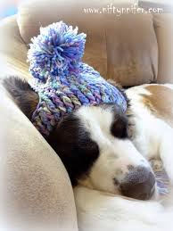 Dog Sleep Pattern Gorgeous Niftynnifer's Crochet Crafts Free Crochet Pattern A Silly Hat