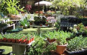 garden nurseries near me. Garden Nursery Near Me Home Design Ideas And Pictures In Nurseries V