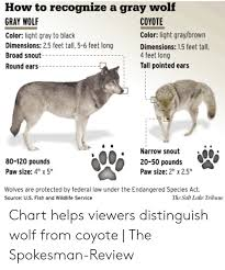 Wolf Species Size Chart How To Recognize A Gray Wolf Gray Wolf Coyote Color Light