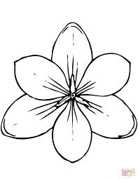 Magnolia In De Knop Kleurplaat Gratis Kleurplaten Printen