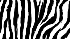 Zebra Patterns Classy Zebra Patterns Thevillasco