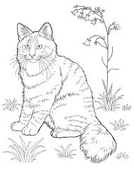 Small Picture 535 best coloring page cats images on Pinterest Coloring books