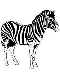 Small Picture Realistic Animal Zebra Coloring Page H M Coloring Pages