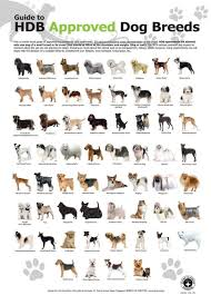 dog chart hdb approved dog breads small dog breeds toy dog breeds