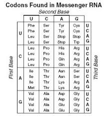 Biology 1 Unit 4 Exam Flashcards Quizlet