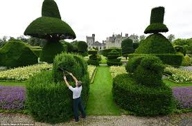 Chris Crowder tends to one of the hundreds of bushes at Levens Hall which  will be