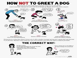 Dog Obedience Hand Signals How To Train Your Dog Not To