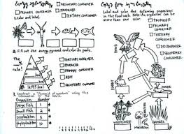 food web pyramid ecology coloring sheet food web energy pyramid food chain tpt