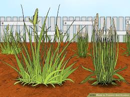 how to prevent soil erosion steps pictures wikihow image titled prevent soil erosion step 1