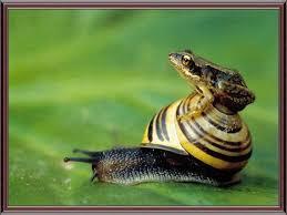 CACHORROS Y ANIMALES Images?q=tbn:ANd9GcSTG8YgYfRbsq7IF6OhSvm55uYYzCEsMlIKjsWggcXg-gW9UvF8