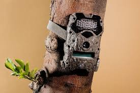 Best Trail <b>Camera</b> Under $100 in 2021 | Reviews by Wirecutter