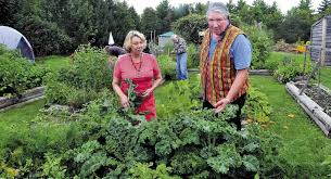 connie bellet and her husband phillip frizzell work in the palermo community garden on