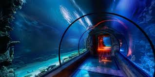 underwater hotel room at night. Sleep With The Fishes At Top 5 Underwater Hotels Hotel Room Night
