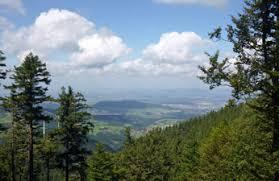 Hasil gambar untuk balk forest