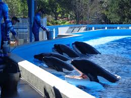 April | 2014 | Educating people about killer whale captivity