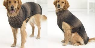 Free Knitted Dog Sweater Patterns Delectable Hunter's Urban Knitted Dog Sweater [FREE Knitting Pattern]