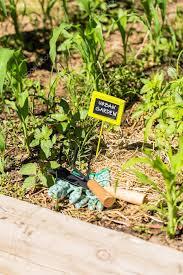 small organic vegetable garden stock photo