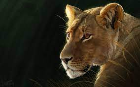 Animal Lion Cats Painting HD Wallpaper ...