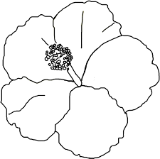 Small Picture hibiscus coloring page hibiscus sabdariffa free hawaiian flower