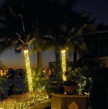 lighting outdoor trees. Palm Tree Outdoor Light Lights Trees Lighting Things You Should Know About .