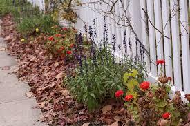 fall garden flowers. Fall Garden Cleanup Flowers