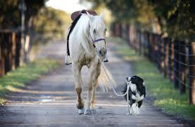 Image For Desktop Horse Animal Tokkorocom Amazing Hd