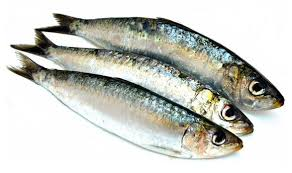 Image result for sardine