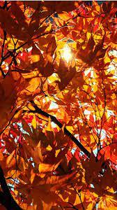 Autumn Ending Wallpapers - Wallpaper Cave