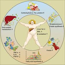 Diet Chart For Fatty Liver Grade 3 New Study Can Low Carb Help Reverse A Fatty Liver Diet