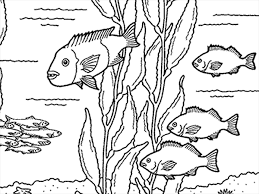 Small Picture Coloring Pages at the Monterey Bay Aquarium