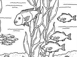 Coloring Pages At The Monterey Bay Aquarium